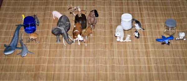 apprendre les animaux resutat final montessori