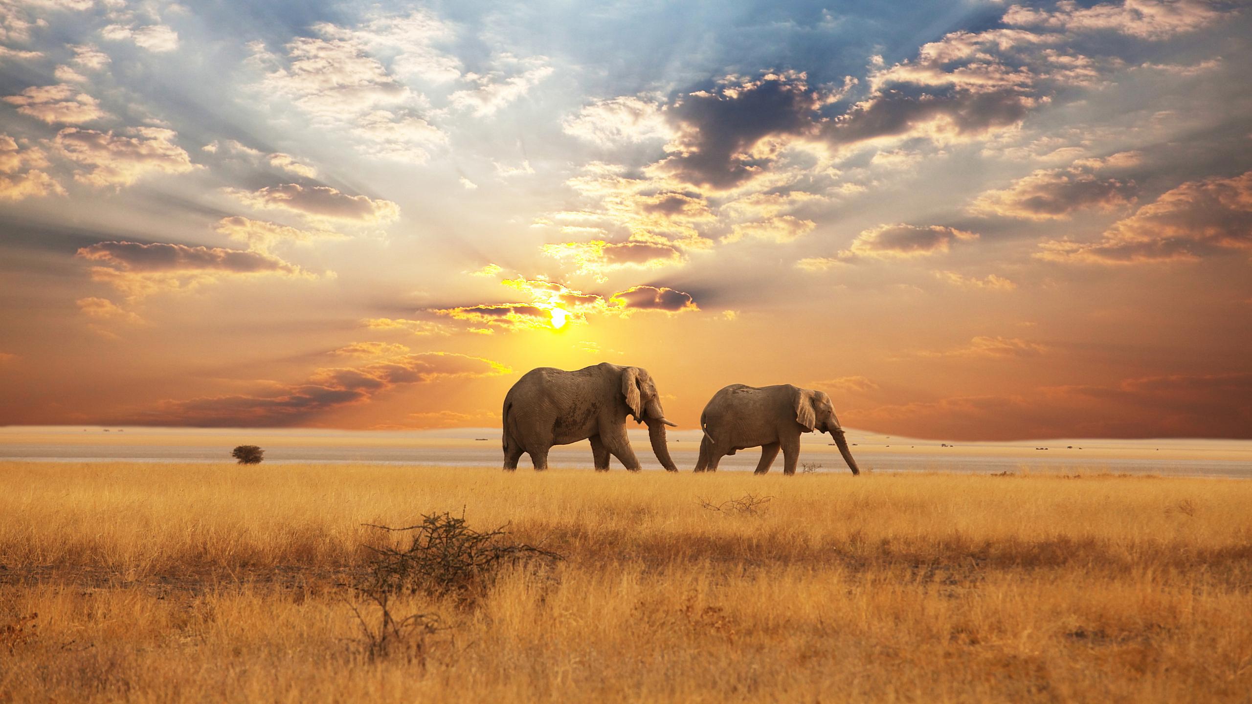 Activit enfant o vivent les animaux - Animaux savane africaine ...